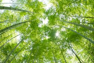 新緑の竹林の写真素材 [FYI01373602]