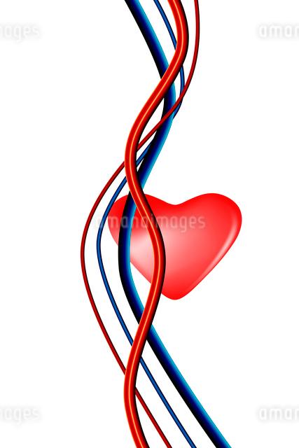 心臓と血管の写真素材 [FYI01374398]