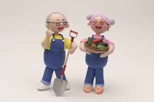 野菜を収穫するシニア夫婦の写真素材 [FYI01375016]