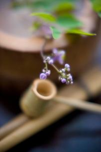 生け花の写真素材 [FYI01375302]