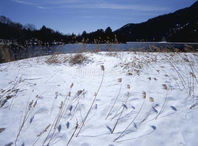 冬の湯の湖畔の写真素材 [FYI01375489]
