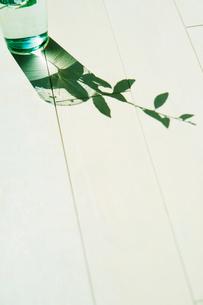 コップの中にある枝のシルエットの写真素材 [FYI01375572]