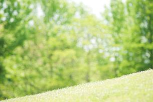 草原と新緑の樹々の写真素材 [FYI01375719]