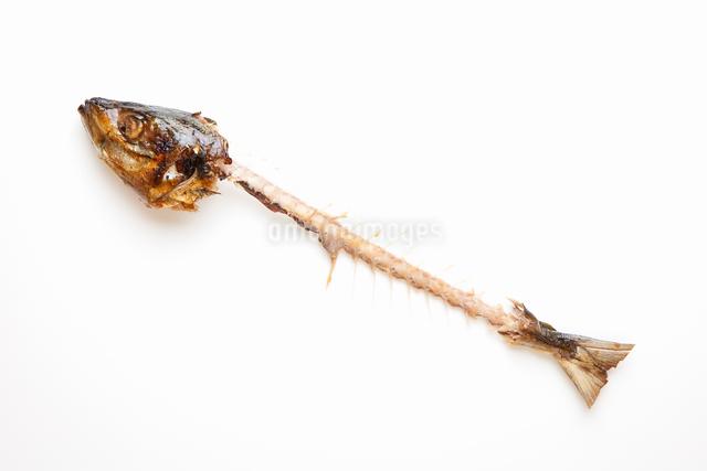 奇麗に食された魚の写真素材 [FYI01376604]