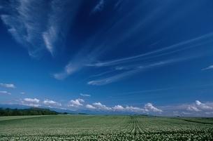 空 雲 野原の写真素材 [FYI01378440]