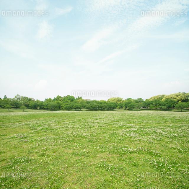 新緑の公園の写真素材 [FYI01378493]