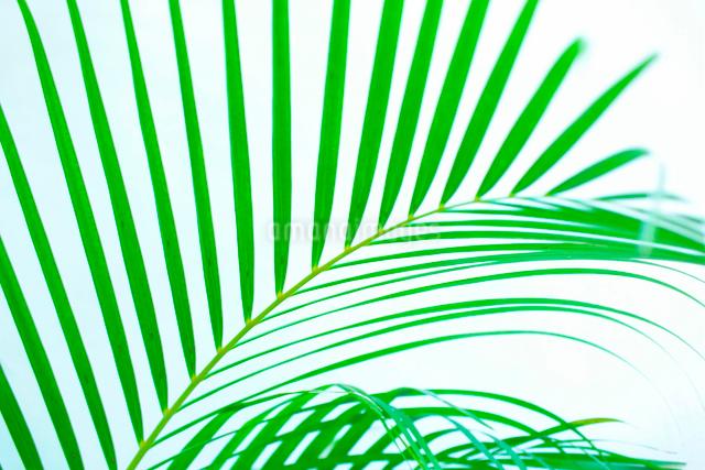 観葉植物の写真素材 [FYI01378974]