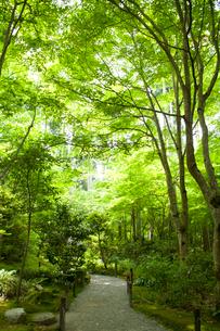 三千院の庭園の写真素材 [FYI01379075]