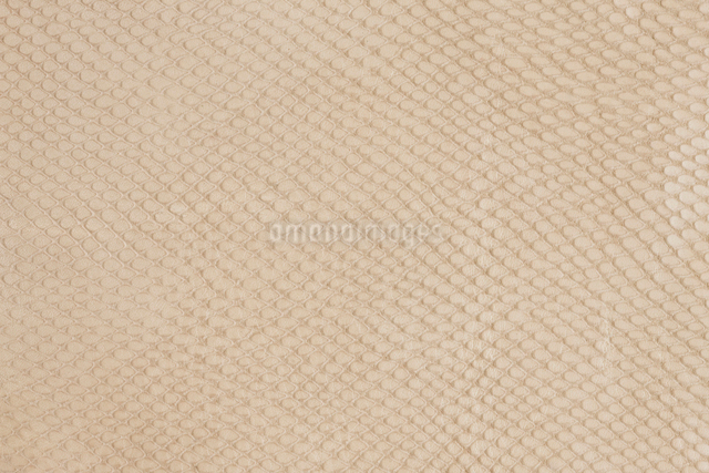 皮革の写真素材 [FYI01381159]