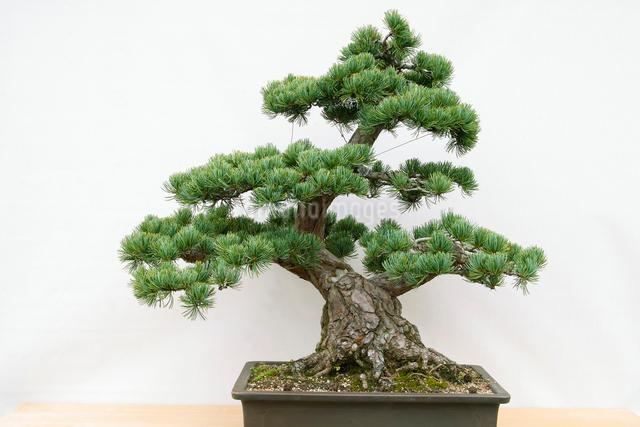 盆栽の写真素材 [FYI01381259]