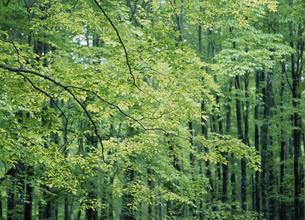 松之山・美人林の写真素材 [FYI01381566]