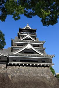 熊本城の写真素材 [FYI01381686]