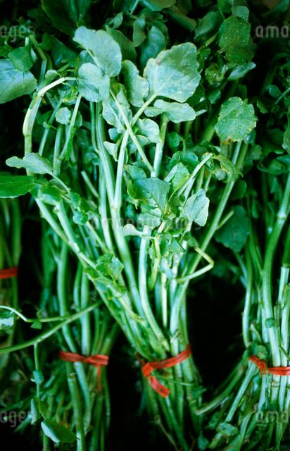 野菜の写真素材 [FYI01382134]