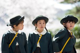 桜並木と3人の幼稚園児の写真素材 [FYI01383506]