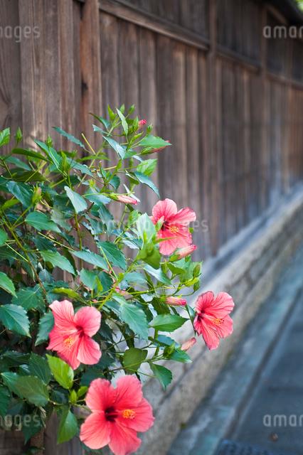 路傍の花の写真素材 [FYI01384248]