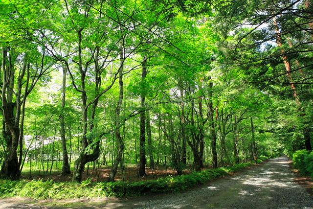 軽井沢別荘地の写真素材 [FYI01384265]