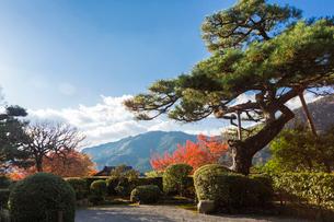 大原の山並みと松の木の写真素材 [FYI01384369]