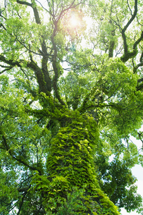 日差し差込む一本の樹の写真素材 [FYI01384599]