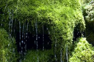 岩清水と苔の写真素材 [FYI01385641]