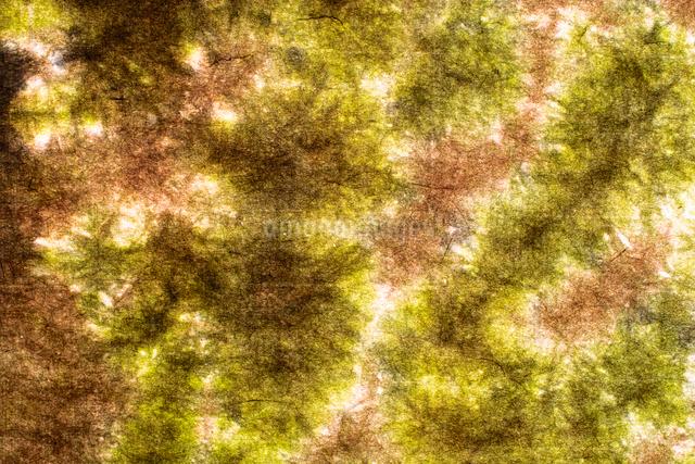 和紙の写真素材 [FYI01386306]
