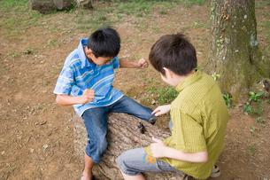 カブトムシ相撲をする男の子達の写真素材 [FYI01386576]