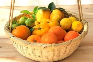 柑橘盛合せ みかん,柚子,花柚子,シークワーサ,レモンの写真素材 [FYI01386952]