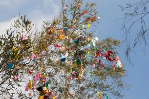 機物神社七夕祭りの写真素材 [FYI01388458]