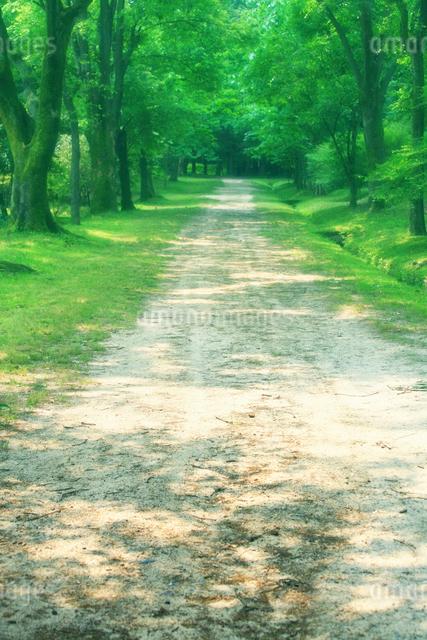 並木道の写真素材 [FYI01388947]