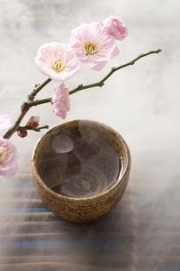 日本酒と梅の花の写真素材 [FYI01389512]