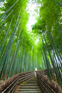 化野念仏寺の竹林の写真素材 [FYI01389784]