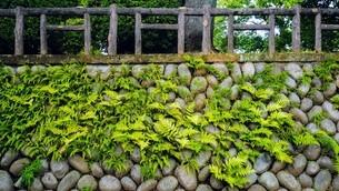 古墳群のある高台の遊び場 多摩川台公園の写真素材 [FYI01390096]
