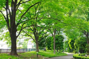 新緑の公園の写真素材 [FYI01390262]