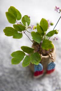 生け花の写真素材 [FYI01390356]
