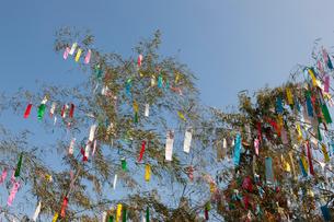 機物神社七夕祭りの写真素材 [FYI01390482]