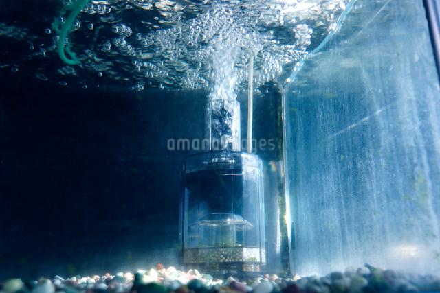 水槽の水中フィルターの泡の写真素材 [FYI01391652]