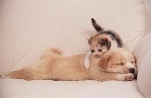 小犬と子猫の写真素材 [FYI01392201]