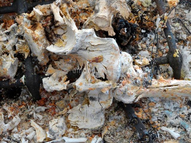 火葬後の遺骨の写真素材 [FYI01394168]