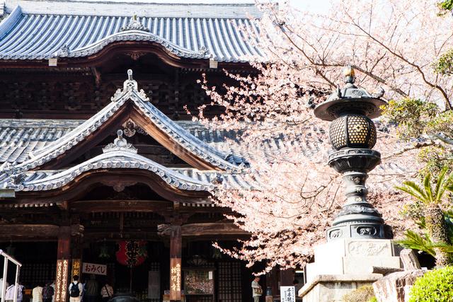 粉河寺(本堂)の写真素材 [FYI01394870]