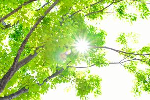 新緑の樹間からさし込む光の写真素材 [FYI01399334]
