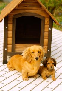犬の写真素材 [FYI01399449]