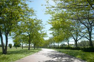 公園の並木道の写真素材 [FYI01400542]