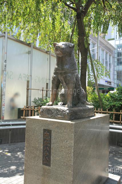 忠犬ハチ公の写真素材 [FYI01401558]