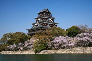 桜咲く広島城の写真素材 [FYI01402556]