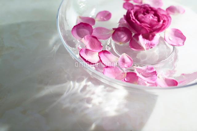 水に浮かぶバラの花びらの写真素材 [FYI01402673]