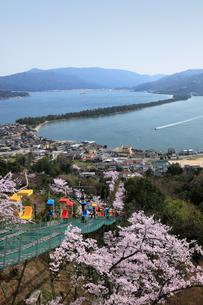 桜と天橋立の写真素材 [FYI01402849]