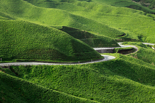 箱石峠の草原と道路の写真素材 [FYI01402967]