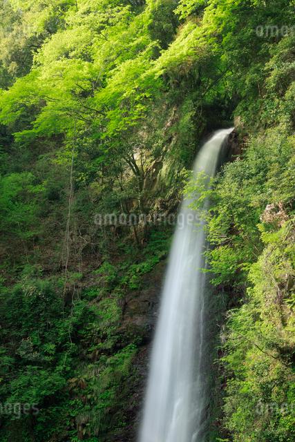 新緑の養老の滝の写真素材 [FYI01403251]