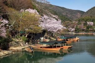 桜咲く嵐山と屋形船の写真素材 [FYI01403270]
