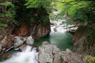 新緑と三段峡の写真素材 [FYI01403303]