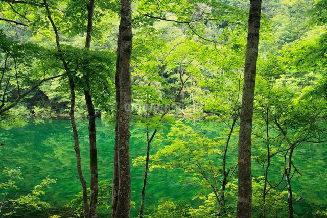 新緑の竜ヶ窪の写真素材 [FYI01403597]